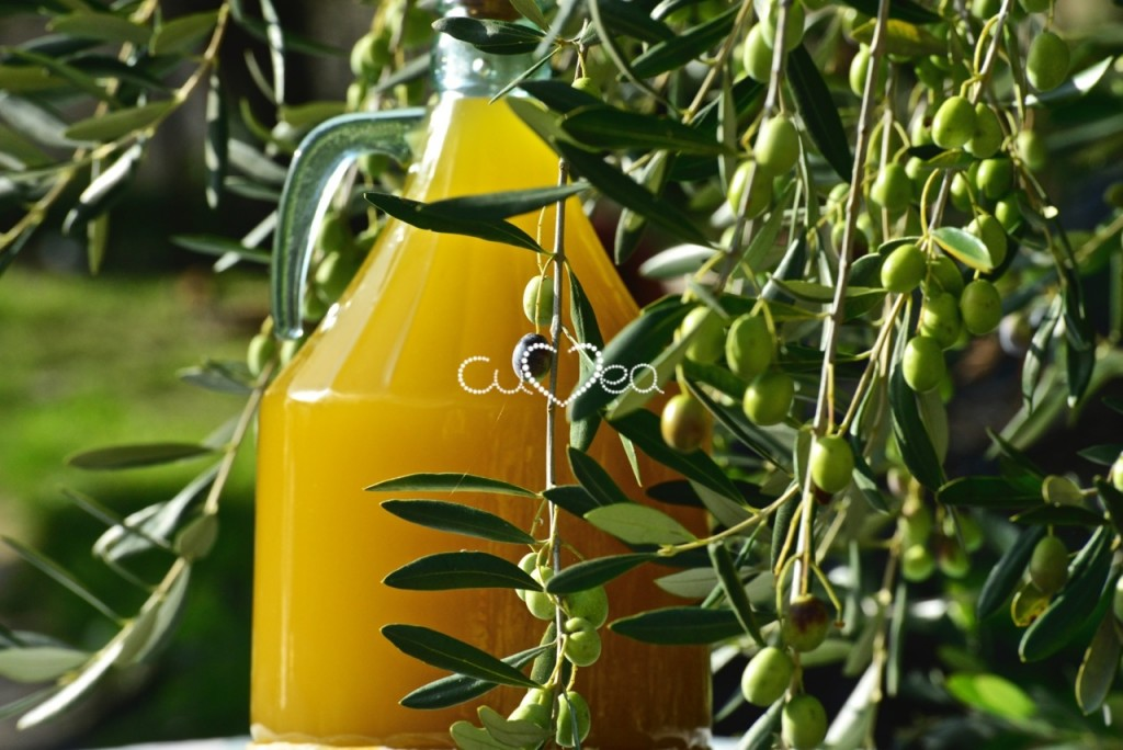 Taggiasca Olive oil just arvested in our orchard in Liguria